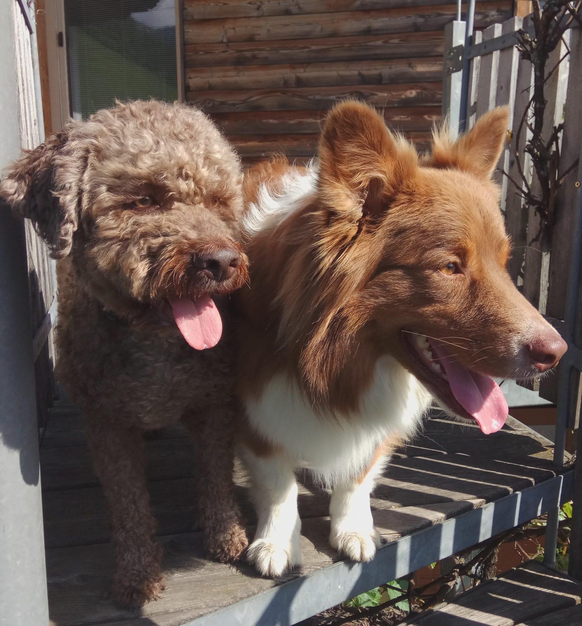 Apartment Anny Urlaub mit Hund